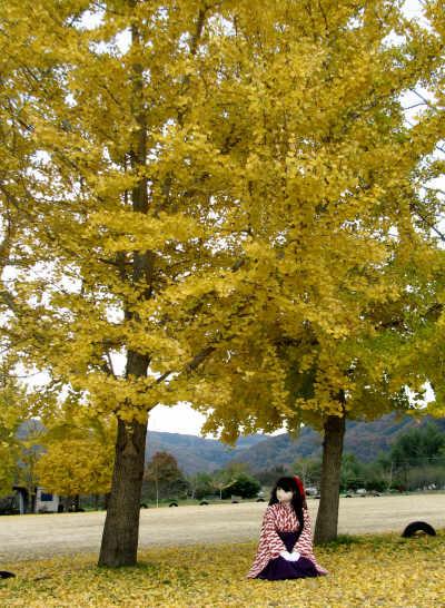 2010_1126_141042AAa.jpg
