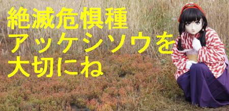 2011_1025_141316AAa.jpg