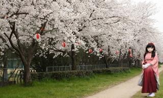 2012_0410_155912AAa.jpg