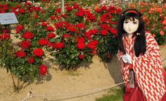 2013_0521_170404AAa.jpg