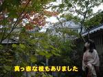 Kif_0536a.jpg